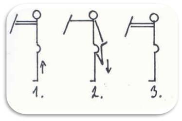 Svaly přední strany stehna