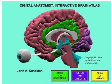 The Digital Anatomist