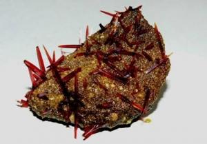 Červená krevní sůl po zrychlené krystalizaci