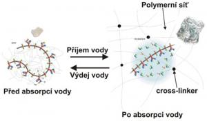 Schéma struktury superabsorbentu před a po přidání vody