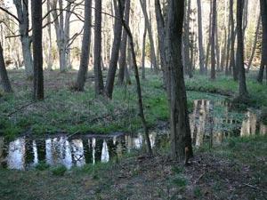 Meandry potoka