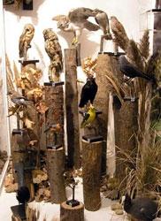Ornitologické zákoutí