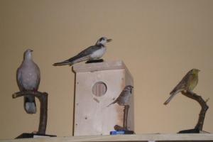 Ptactvo