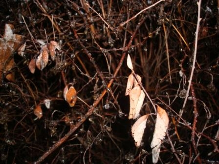 Kapky rosy na větvičkách vypadaly jako korálky